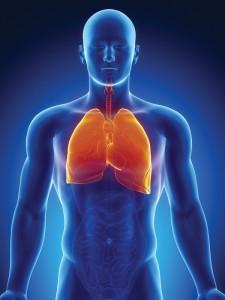 rysunek płuc